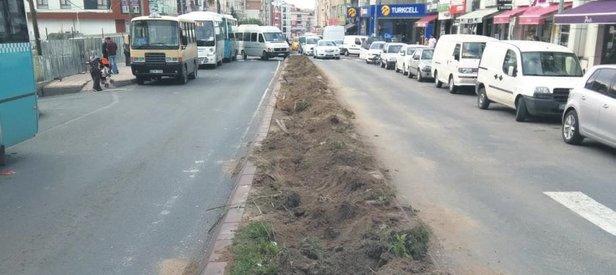 Yine CHP'li belediye yine ağaç katliamı