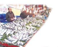 Balık fiyatları yüzde 70 indi