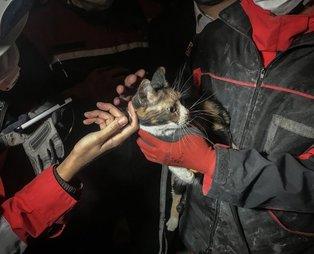 İzmir'de depremin ardından yürekleri ısıtan görüntü: K-9 arama köpeği 'Bob' enkaz altında kalan kediyi kurtardı