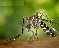 Asya Kaplan Sivrisineğinde korku yaratan panik