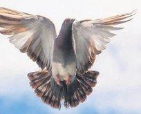 Güvercine 1.2 milyon euro