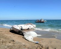 13 metrelik balinanın ölüm nedeni