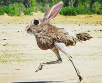 Hibrit hayvanların şaşırtan görüntüleri