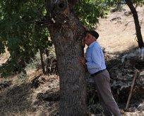 40 yıldır ağaçları dinliyor!