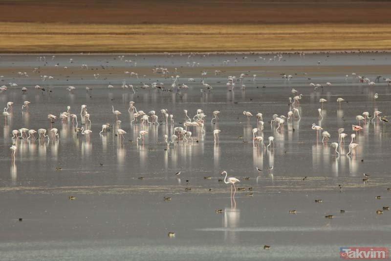 Van Gölü havzasında görsel şölen!