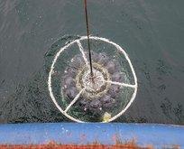 Marmara Denizi'nde derin müsilaj incelemesi!