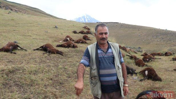 Iğdır'da 74 koyun yıldırımda telef oldu!