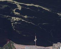Marmara'daki müsilaj felaketi uzaydan görüntülendi!
