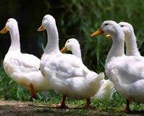 Ördek avcılarına 17 bin lira ceza