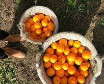 Çok güzelsin portakal
