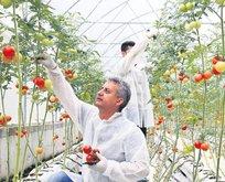 'Dijital tarım' ile hasadı öne çekti