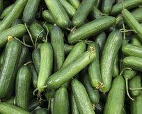 En çok artış salatalıkta