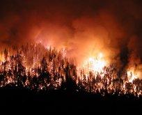 Dünya orman yangınlarıyla boğuşuyor!