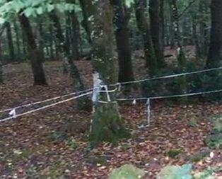Belgrad Ormanı'nda Kaşıkçı araması