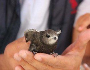 İsmi Kuran'da geçen Ebabil Kuşu Erzurum'da bulundu