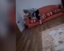 Cani anne gözaltında!