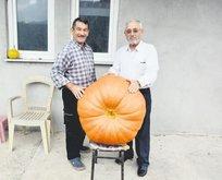 90 kiloluk bal kabağı