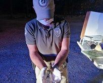 Kuşları yasa dışı avlayanlara ceza