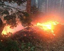 Uludağ'da orman yangını!