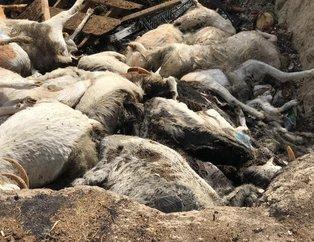 Denizlide vahşet! Aç bırakıp öldürdükleri hayvanları çukurda yaktılar