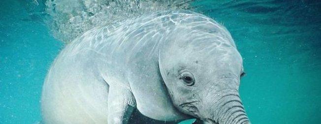 Balina fil karışımı deniz canlısının görüntüsü ortalığı karıştırdı! (Hibrit hayvanların şaşırtan görüntüleri)