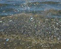 İşte balıkların ölüm nedeni!
