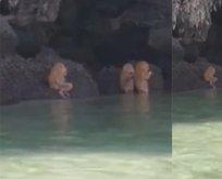 Taylanddaki esrarengiz canlıların sırrı ortaya çıktı