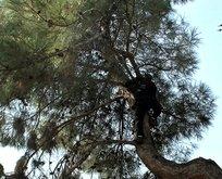 16 gün aç susuz ağaçta mahsur kaldı, itfaiye kurtardı