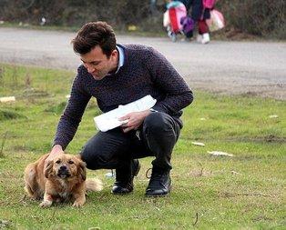 CHPli belediyeden köpek katliamı