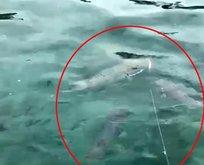 Siyanürden 1200 kat tehlikeli! Antalya sahilinde görüldü