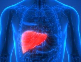 Karaciğer yenilenmesinde sağlıklı besinler önemli rol oynuyor! Bu besinler karaciğeri yeniliyor...