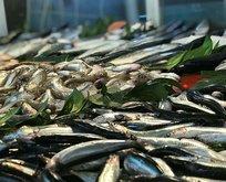 Balık avı mevsimi bereketli başladı
