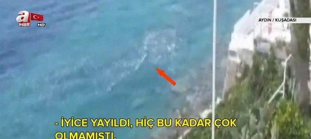 Kuşadası'ndan pis kokular geliyor! CHP'li Kuşadası Belediyesi konuya sessiz...