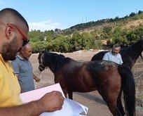 Skandal ortaya çıktı! Atların çilesi bitmedi