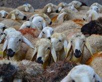 Kurban eti kaç kişiye dağıtılır? Kurban eti nasıl dağıtılır pay edilir?