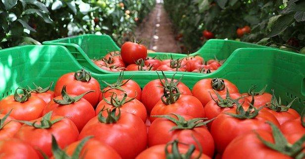 Burdur'daki yayla domatesine talep arttı
