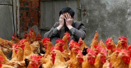 Hollanda'da koronavirüsten sonra kuş gribi alarmı