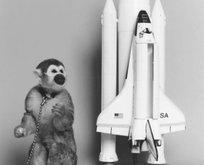 İşte uzayın hayvan tanıkları