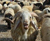 Hayvan pazarında sahte parayla kurbanlık aldılar