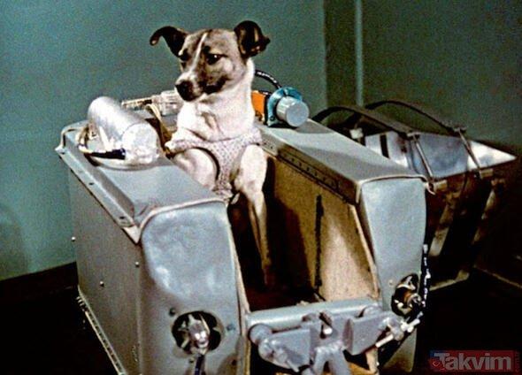 Uzaya yollanan hayvanların başına neler geldi? İşte uzayın hayvan tanıkları