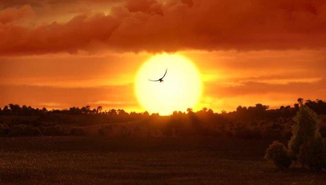 Anka Kuşu Nedir Zümrüdü Anka Kuşu Efsanesi Neyi Anlatır