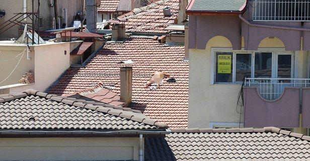 Burdur'daki çatı sapkını gözaltında