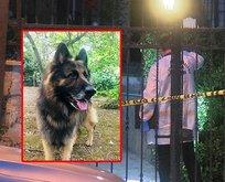 Eşini ısıran köpeği vurarak öldürdü