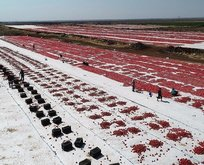 Tam 80 bin ton! ABD ve Avrupa'dan talep yağıyor