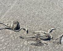 Tuz Gölü'nde flamingo katliamı