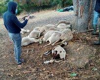 Yıldırım, köylünün 13 koyununu telef etti