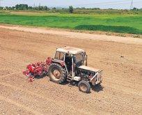 Sakarya'da endüstriyel kenevir üretimi başladı