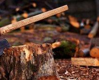 Kestiği ağacın altında can verdi