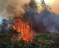 İki bölgede orman yangını!