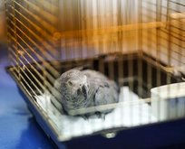 İşkence gören papağan ameliyat edildi